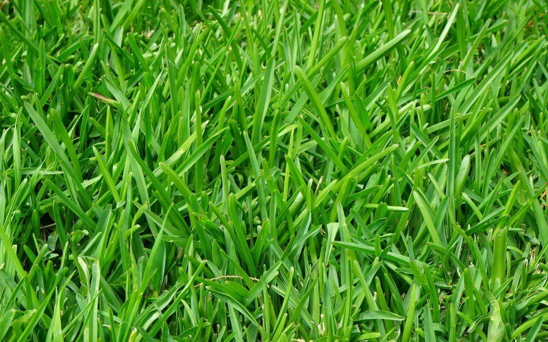 lawn preparation for the spring and summer months in Johannesburg