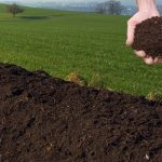 Topdressing your Lawn