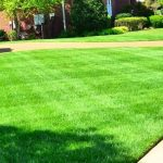 Create a healthy lawn and reduce the need for fertiliser
