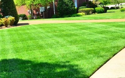 Create a healthy lawn and reduce the need for fertiliser.
