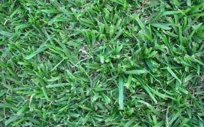 Choose a water wise indigenous lawn for your region