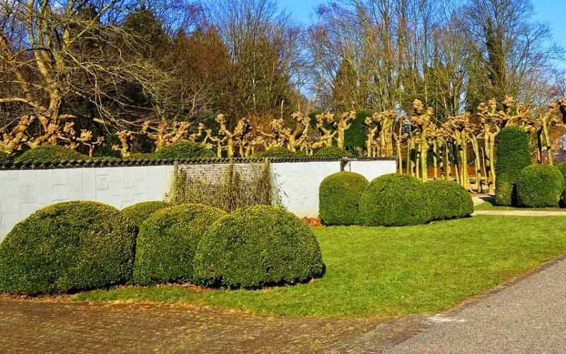 Pavement Lawn design