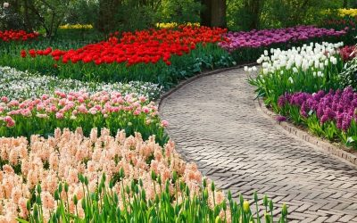 Garden pathway design and tips