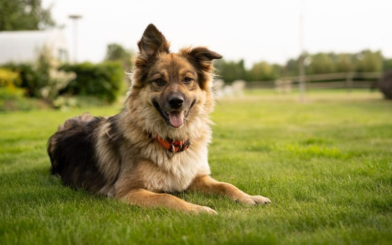 Dog owners Lawn Care tips for a sustainable Lawn