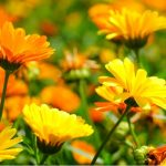 Top annuals to add to your garden